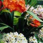 Доставка цветов ярославль камелия