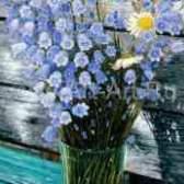 Голландский колокольчик цветы своими