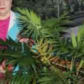 Как цветет хамедорея фото ню