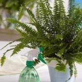 Как опрыскивать растения?
