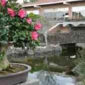 Как сажать камелию в саду розы