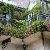 Как устроить зеленый сад на собственном балконе
