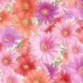 Как выглядит цветок гербера фотографии