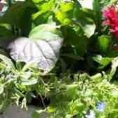 Как выглядят семена герберы цветы
