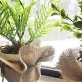 Как вырастить травы на подоконнике