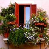 Какие цветы посадить на балконе: подбираем садовые растения для оформления балконов разной степени освещенности