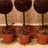 Кофейное дерево баобаб своими руками