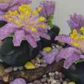 Литопсы из бисера калина