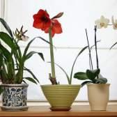 Необычные декоративно-лиственные растения для дома