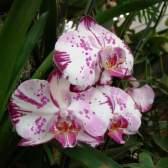 Выставка в ботаническом саду мгу, или весне дорогу!