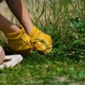 Польза сорняков для земли и огорода