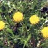 Природные средства борьбы с болезнями и вредителями (часть 3)