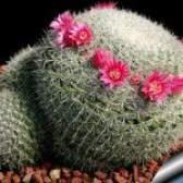 Разнообразие кактусов и правильный уход за ними