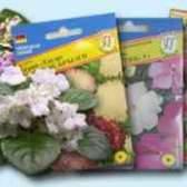 Семена сенполии купить