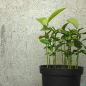 Удобрения для комнатных растений