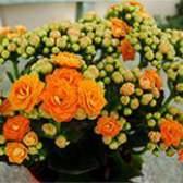 Удобрения для красивоцветущих растений