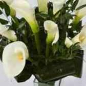 Заказ цветов каллы купить