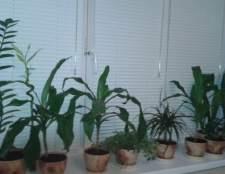 10 Засухоустойчивых комнатных растений