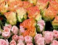 Азалия томск цветы