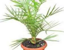 Большие растения у вас в доме