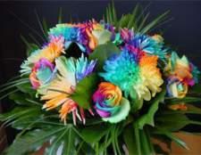 Бутоны всех цветов радуги