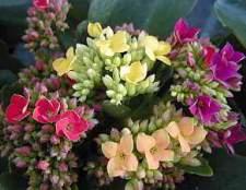 Цветы в доме – это красиво, но не только