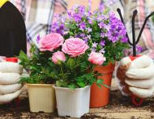 Декоративно цветущие растения комнатные растения