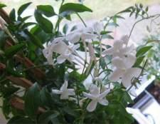 Декоративно цветущие растения в вашем доме