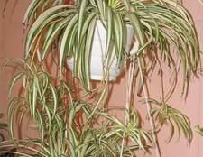 Домашние растения для спальни