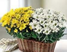 Экология дома: польза комнатных растений