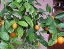 Как вырастить ананас дома видео