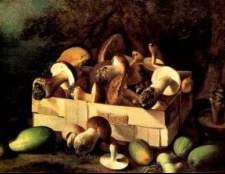 Классификация грибов и определение их доброкачественности