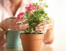 Когда лучше пересаживать комнатные растения