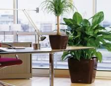 Комнатные растения в офисе — это важно
