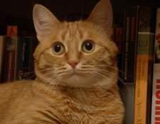 Кот-цветовод: ядовитые и вредные домашние растения для кошек