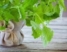 Мелисса полезные свойства травы лимонной и эфирного масла