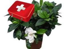 Неотложная помощь комнатным растениям