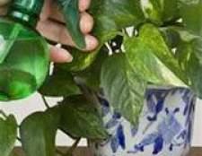Опрыскивание домашних растений