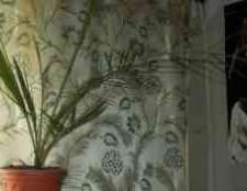 Пальма из косточки финика фоторедактор