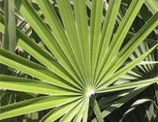Пальмы имеют исключительную декоративность