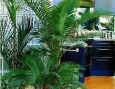 Пальмы в домашних условиях