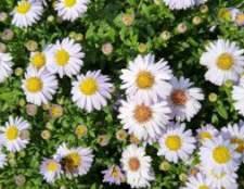 Подготовка многолетних цветов к зиме