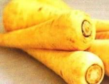 Полезный овощ пастренак