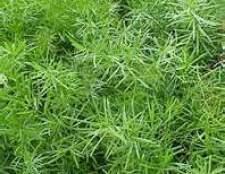Особенности видов комнатных растений