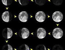 Советы по пересадке комнатных растений по лунному календарю