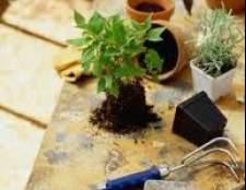 Советы по пересадке комнатных растений в октябре