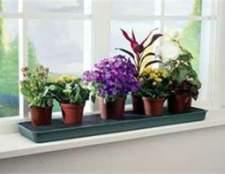 Советы по размещению растений в доме