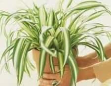 Советы по уходу за комнатными растениями осенью