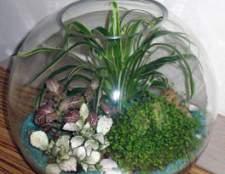 Террариум – цветы в бутылке