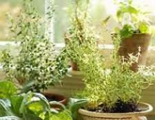 Влияние домашних растений
